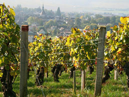 Burgundy wine tours from Paris - Chablis