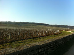 Burgundy wine tours from Paris: Romanee Conti