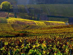 Famous places in France: Champagne vineyards