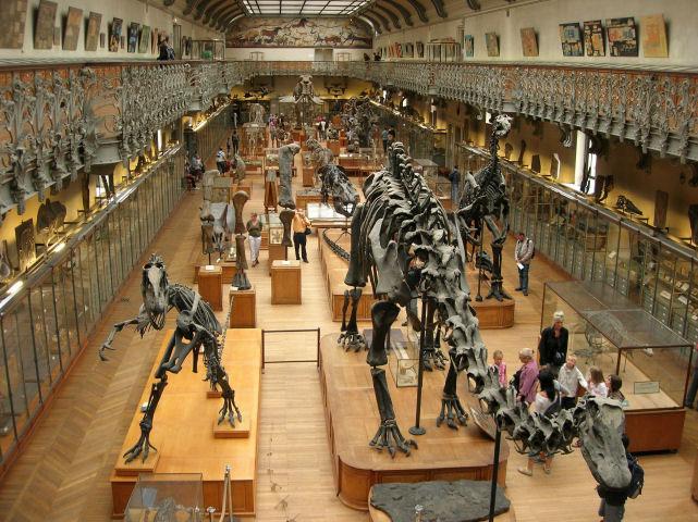Gunma Museum Of Natural History