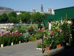 Paris Flower Market on Ile de la Cité