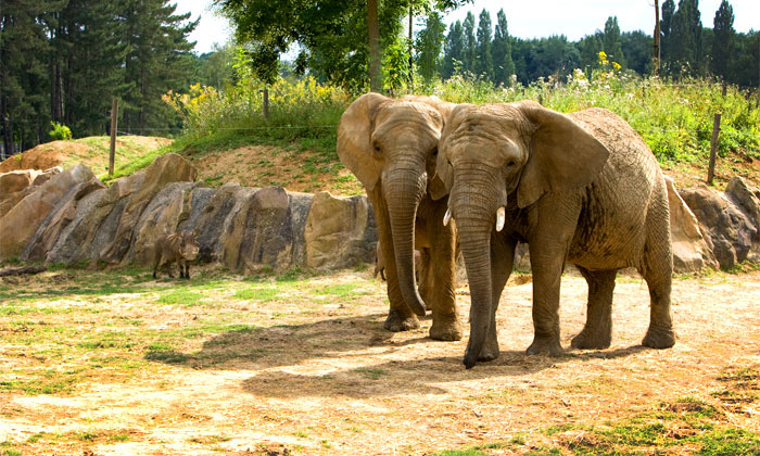 Thoiry safari paris for Zoo en yvelines