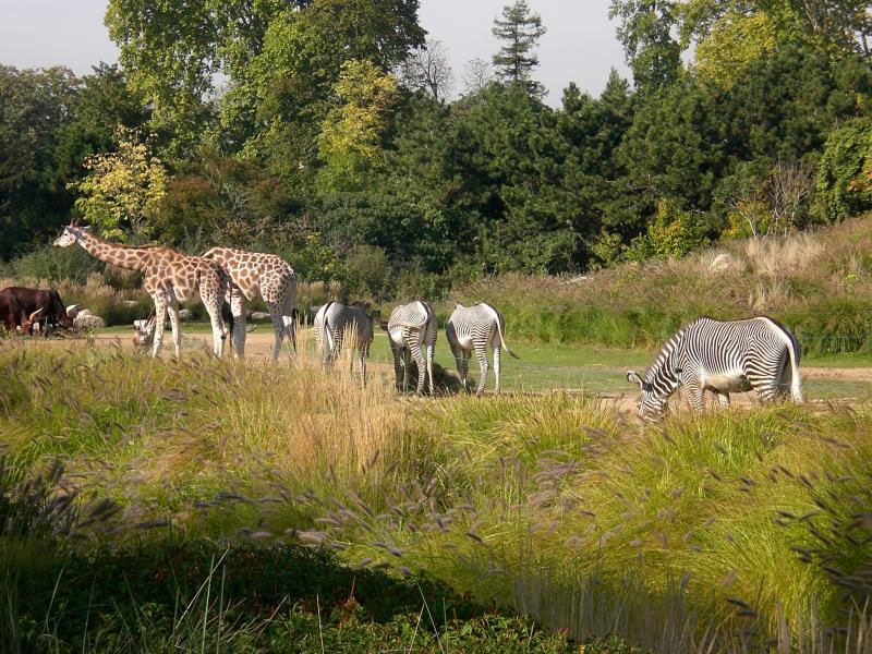 Thoiry safari park a safari near paris ideal with kids for Parc animaux yvelines