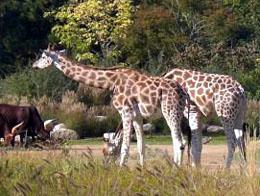 thoiry safari park a safari near paris ideal with kids. Black Bedroom Furniture Sets. Home Design Ideas